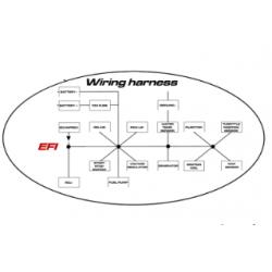 WIRING HARNESS EFI - EVO II